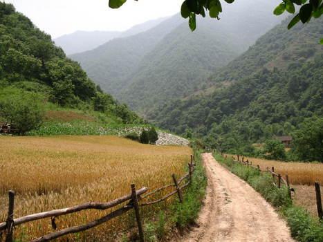 家乡的小路